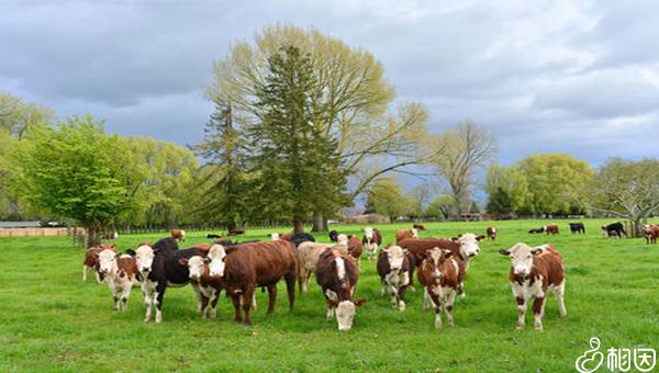新西兰牧场