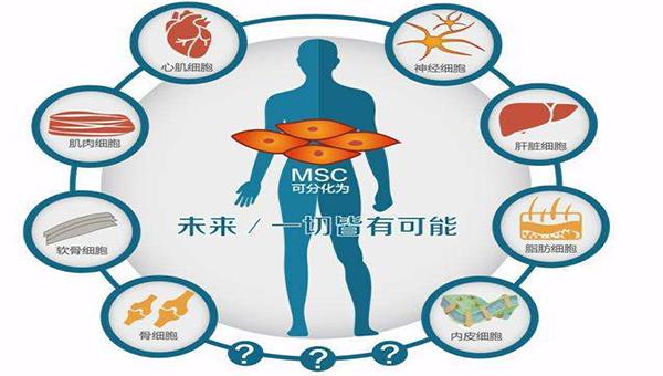 干细胞存储能治疗多种疾病