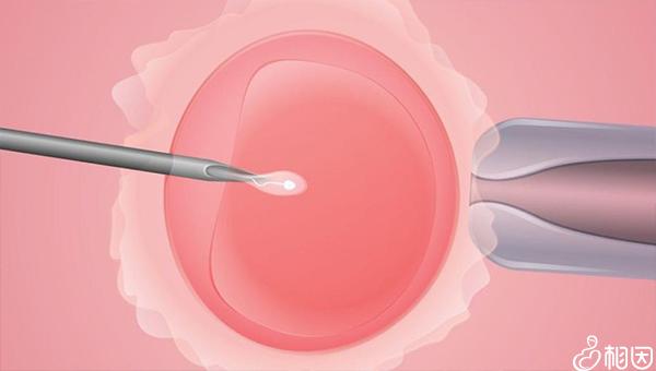 试管移植后咳嗽影响胚胎着床