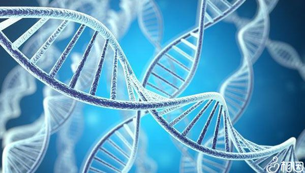 胚胎发育受遗传因素的影响