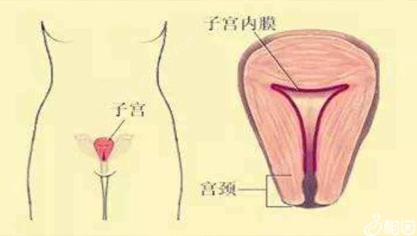 a型子宫内膜