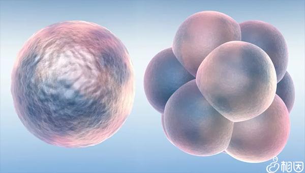 三级胚胎质量一般