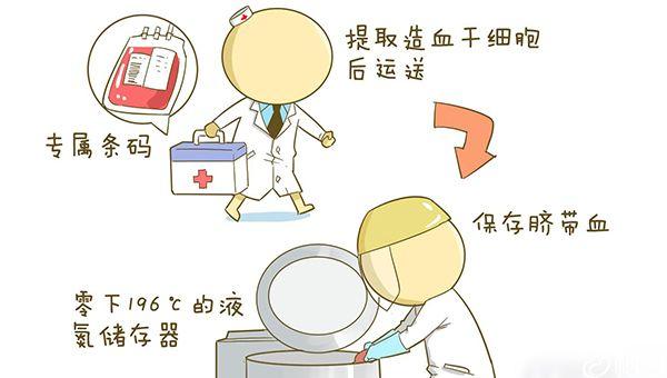 脐带血保存于液氮中