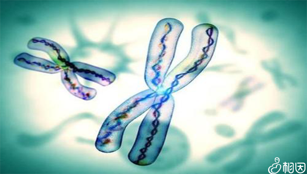 9号染色体多态性