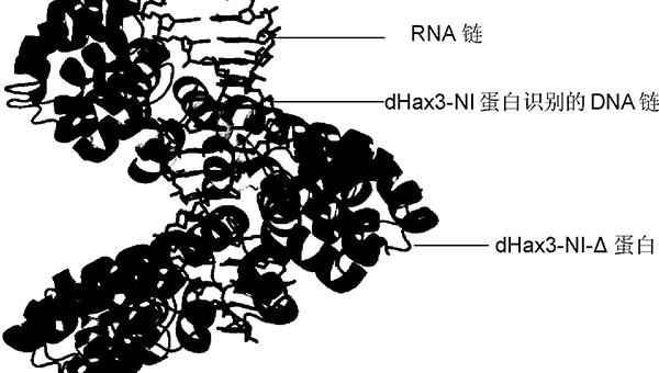 基因发生杂合突变