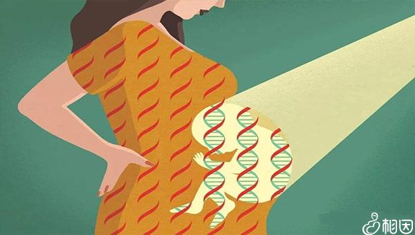 9号染色体微重复遗传几率