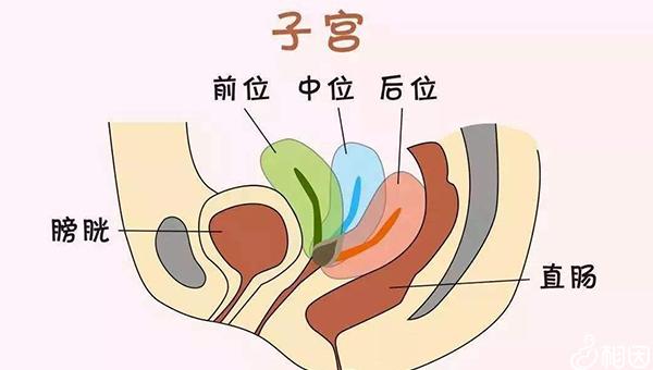 子宫的位置