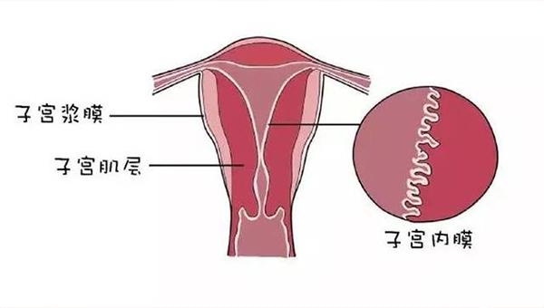 内膜蠕动会影响试管移植