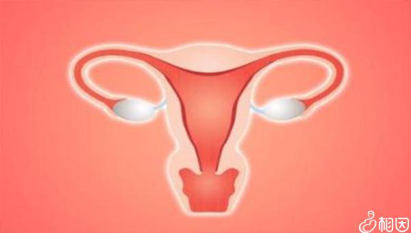 子宫内膜蠕动