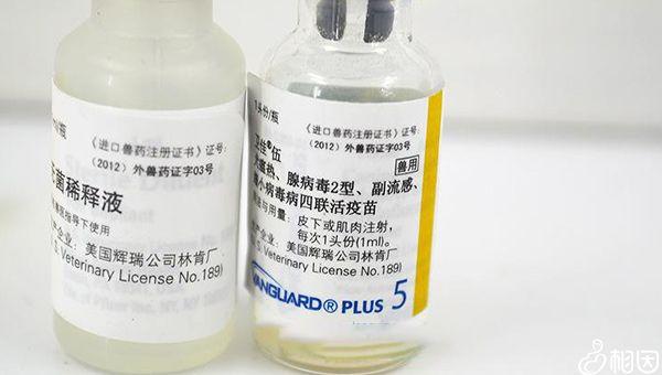疫苗接种禁忌