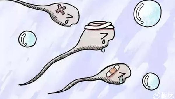 精子质量差