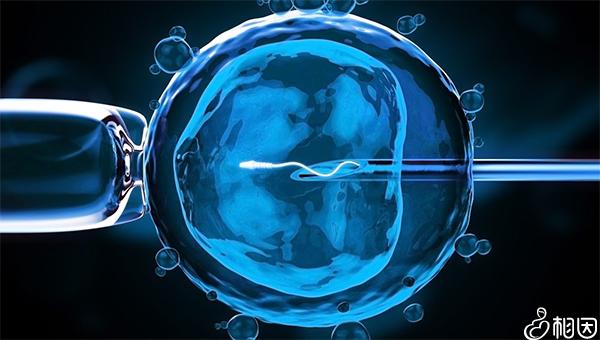 福建省妇幼试管可以放两个胚胎