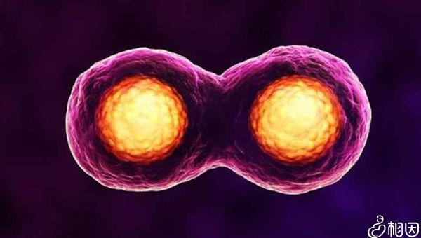 融合胚胎有风险