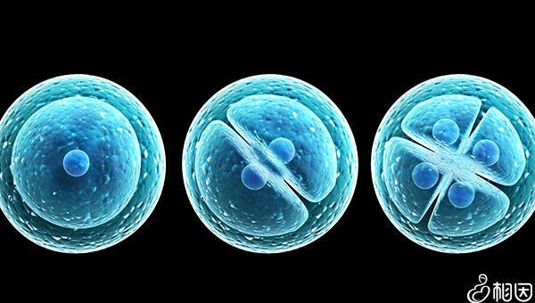 卵子和精子结合需要时间