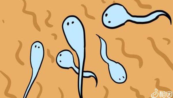 提高y精子的活力