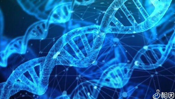 基因可以遗传