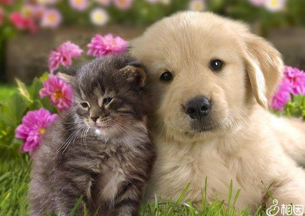猫狗容易引起弓形虫感染