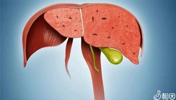 清淡饮食有利于肝脏的恢复