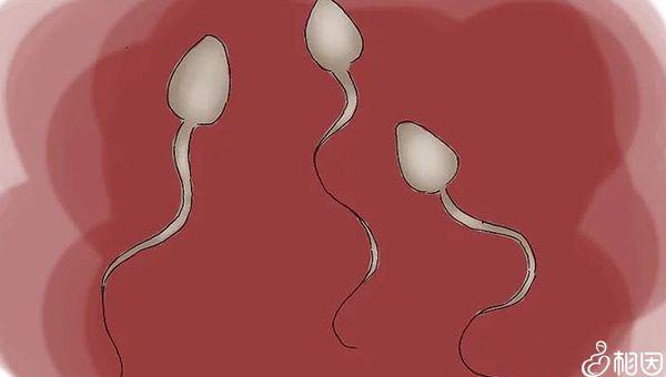 阻塞无精症可用药物治疗