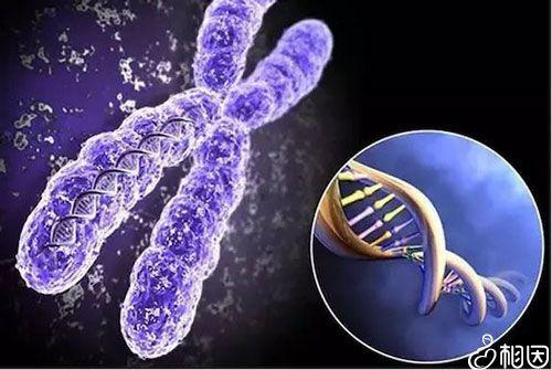 染色体检查适应症