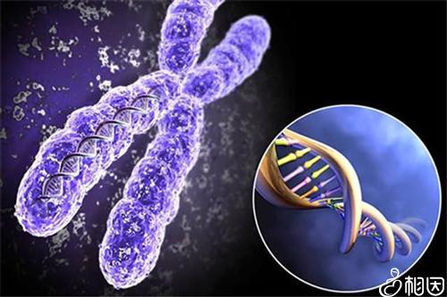 染色体示意图