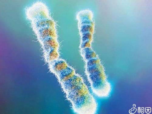 造成染色体异常的原因