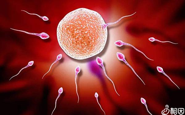 排卵障碍是什么意思
