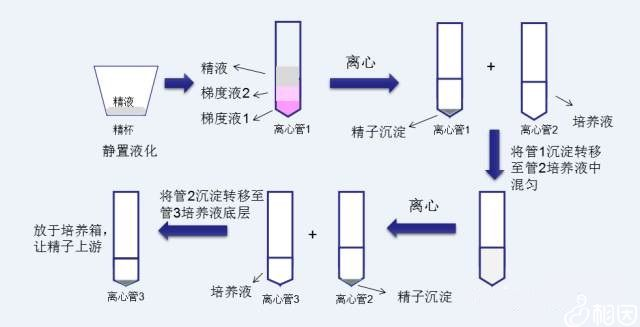 洗精原理与流程