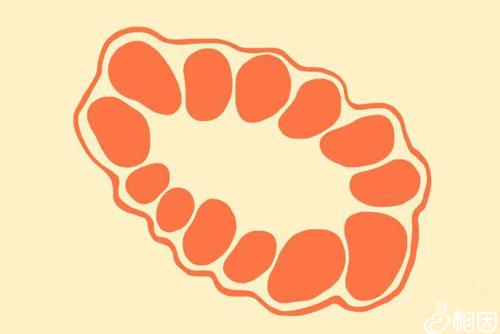 窦卵泡计数超出正常值可怀疑为多囊卵巢