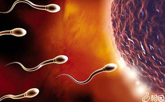 精氨酸对男性的作用