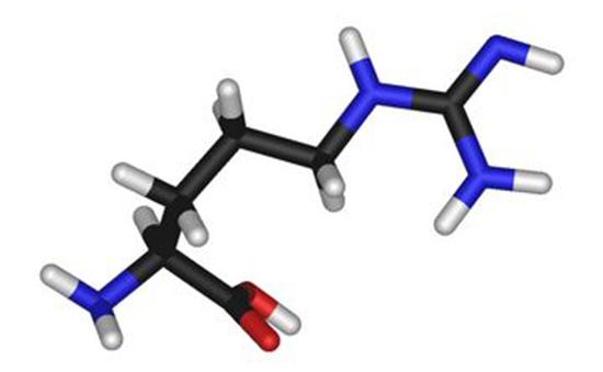 什么是精氨酸