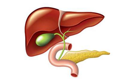甘胆酸的临床意义