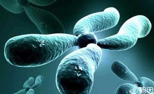 冻胚移植的流程介绍