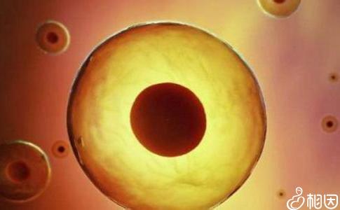 胚胎什么时候移植好