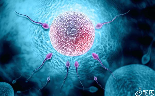 黄体期方案对窦卵泡数量有要求