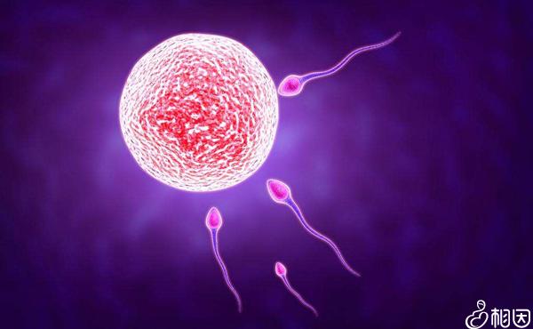 自然周期控制卵泡较弱