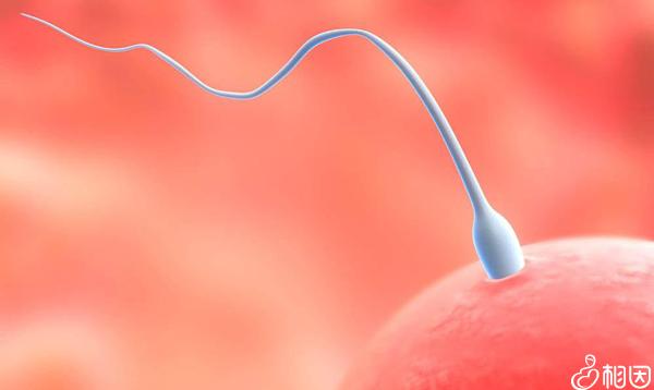 精子卵子将直接影响到试管婴儿成功率