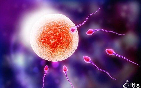 什么是人工授精