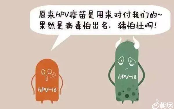 hpv疫苗是什么