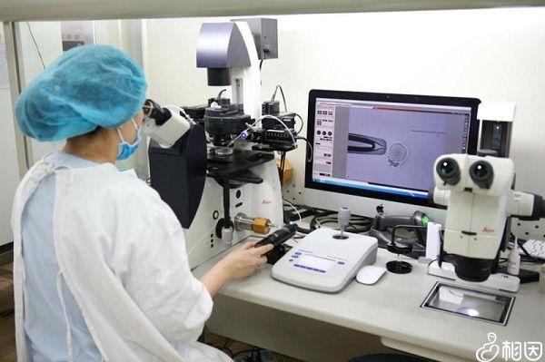 胚胎体外受精