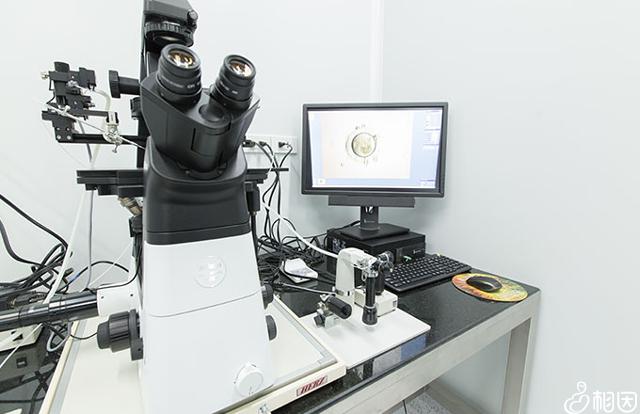 胚胎观察器