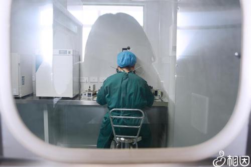 帮助精卵结合培育胚胎