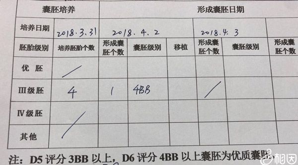 4bb囊胚