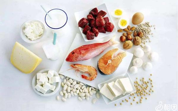 补充优质蛋白质