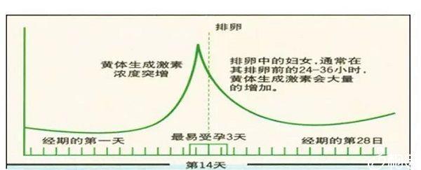 LH与月经周期曲线图