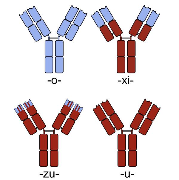抗体有效期