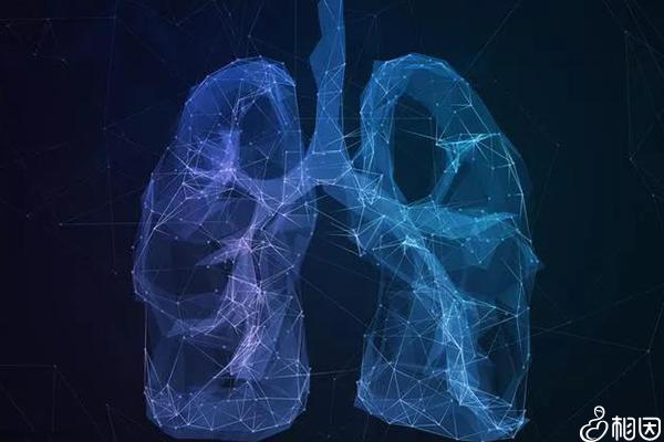 人体的肺部结构
