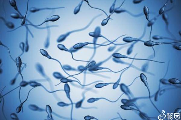 男性精液分析检查