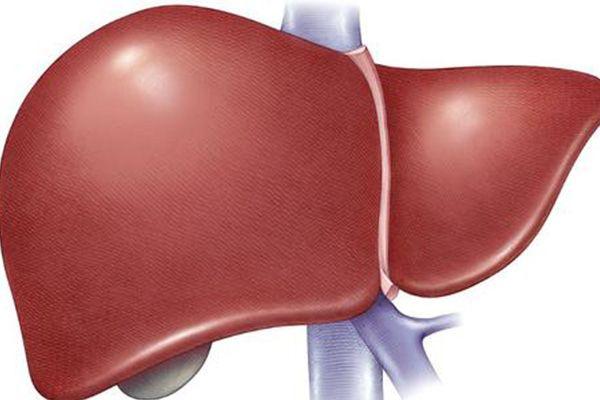 肝脏的情况是动态变化的