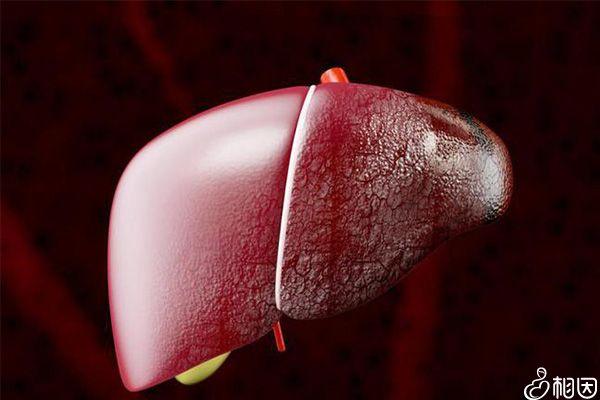 肝功能检查结果仅作为诊断参考